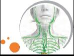 insanın lenfakisi sisteminin fotoğrafı